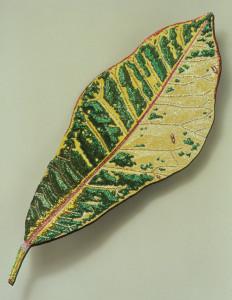 Croton Ancho