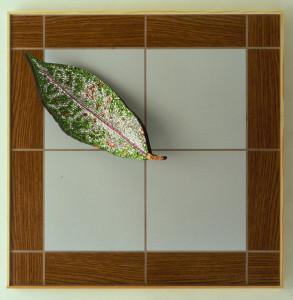 Croton Fresco